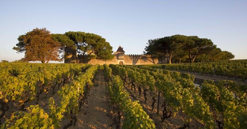 Bordeaux winery tour ©G.Uféras pour Yquem(25)