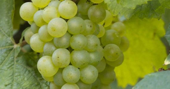 Vine escape - credits Penet Chardonnet