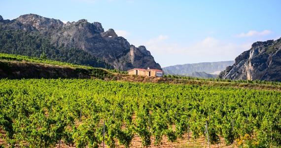 Bodegas Bilbainas 2 Rioja wine tour