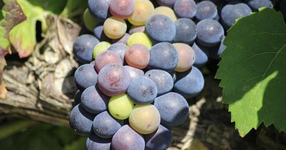 Paris wine tour- Credits OTAR Carmen Moya