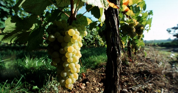 Wine tours in Alsace