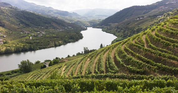 Grape treading- credits Douro Wine Tourism