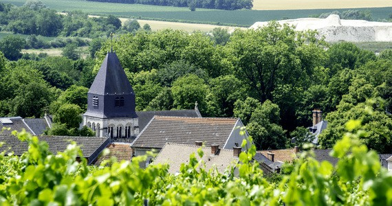 Champagne harvest tours- credits Vine Escape