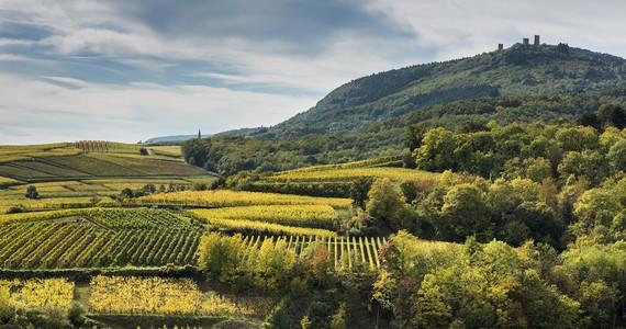 wine tour in Alsace credits Domaine Viticole de la Ville de Colmar