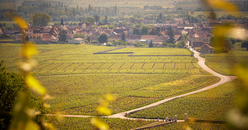 Burgundy wine tour - Credits Olivier Leflaive