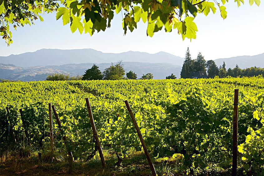 Vinho Verde Vineyards Credit winetourismportugal